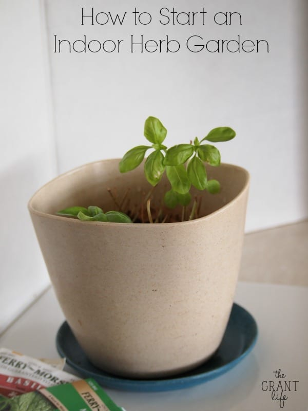 How to start an indoor herb garden.  Hint - its super easy!