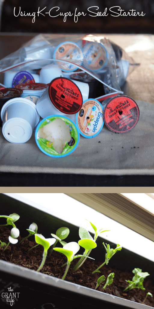 Using K-cups for seed starters