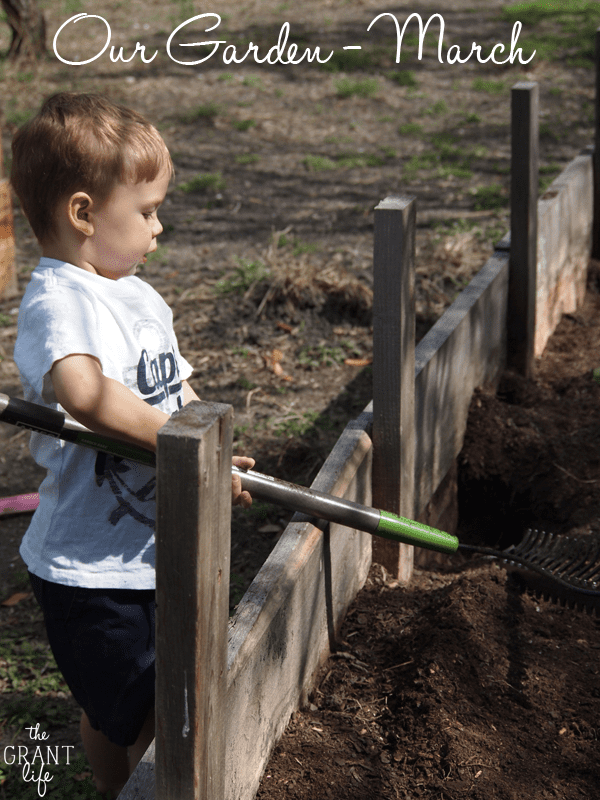 Our Garden – March