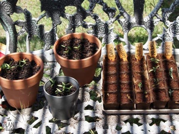Our Garden – April