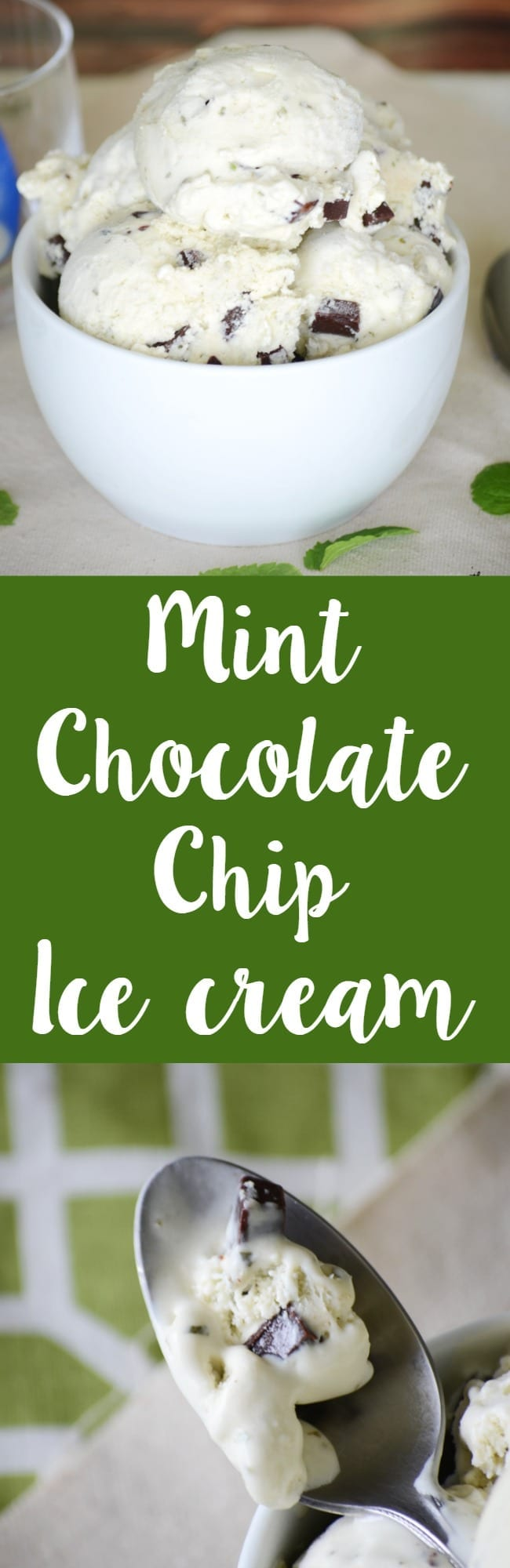 Homemade mint chocolate chip ice cream! Made with real mint