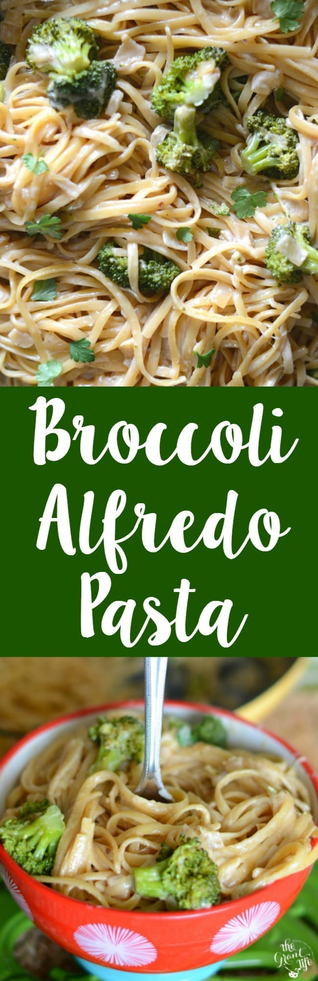 ONE POT broccoli Alfredo pasta!  Done in under 30 minutes and so creamy you'll want to make it every night!